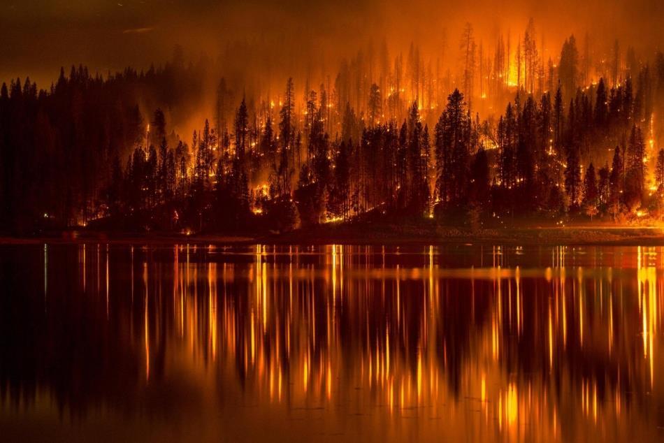 К чему снится тушить горящую траву фото