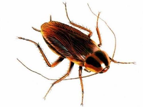 Беременный таракан во сне 13