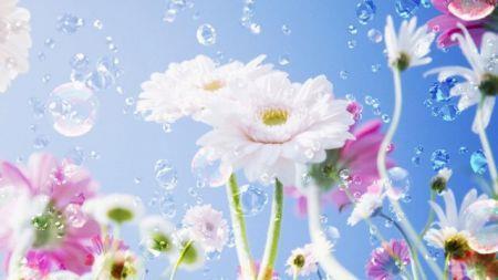 Красивые цветы во сне