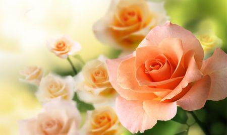 Розы во сне говорят о любви, чувствах и дружбе