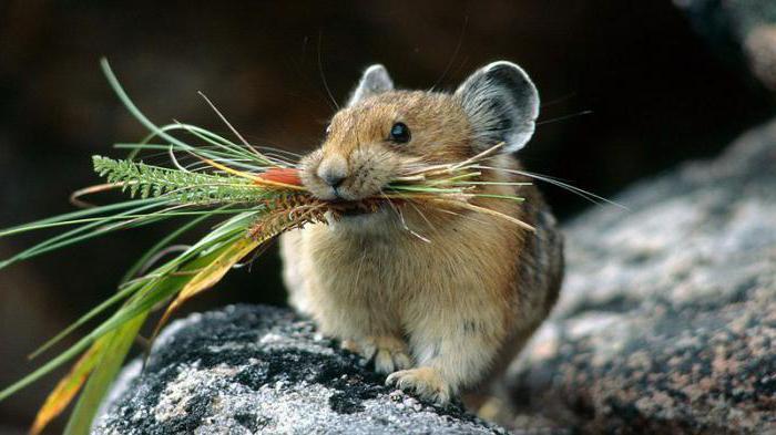ловить мышей во сне