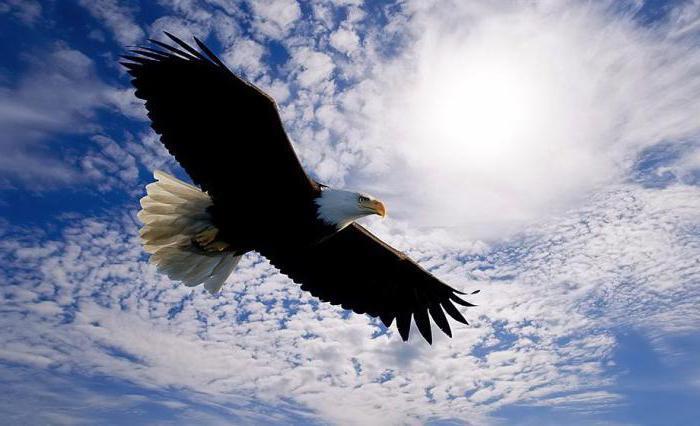 к чему снится орел в небе