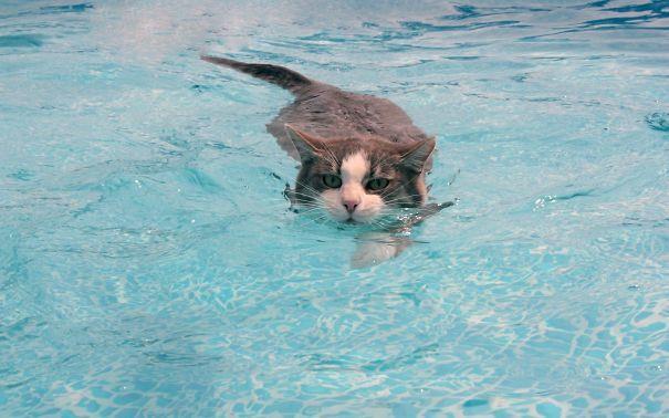 К чему снится кошка в воде женщине