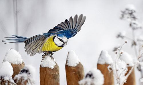 К чему снится птица клюнула фото