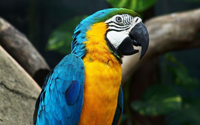 Сонник: к чему снится попугай? Видеть во сне попугая