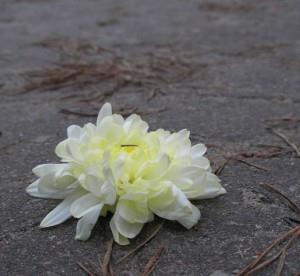 К чему снятся вырванные цветы фото
