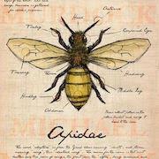 сонник укус пчелы