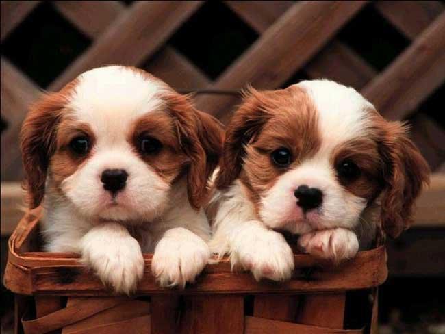 Фото Сонник много собак и щенков
