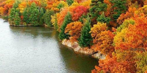 к чему снится лес и озеро