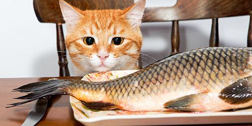 к чему снится кормить кошку рыбой