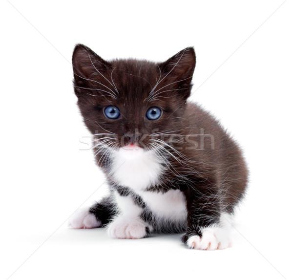 К чему снится черно белый кот фото
