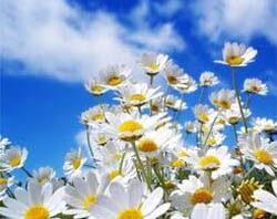 К чему снится цветок?