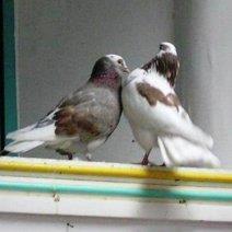 Чего ждать, если приснились голуби на окне?