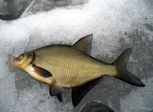 К чему снится прыгающая рыба фото