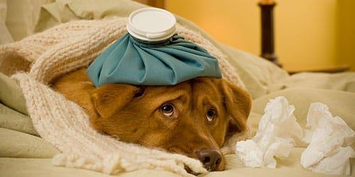 заболел домашний питомец во сне