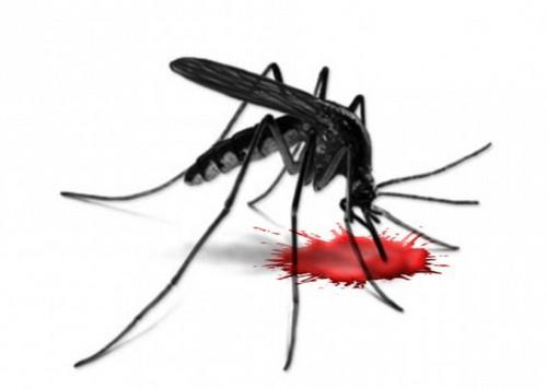 Комар и кровь