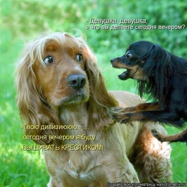 Фото К чему снится большая добрая собака женщине