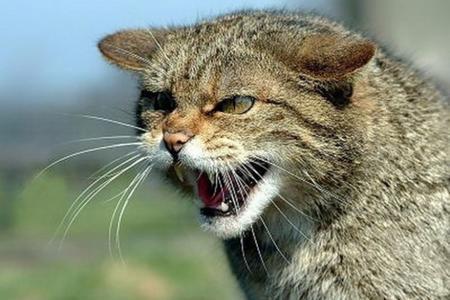 К чему снится дикий котенок фото