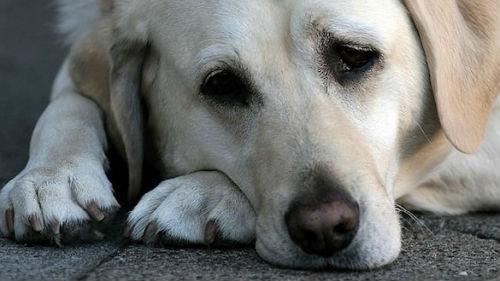 к чему снится потерять собаку