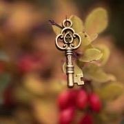 Ключ на кусте барбариса