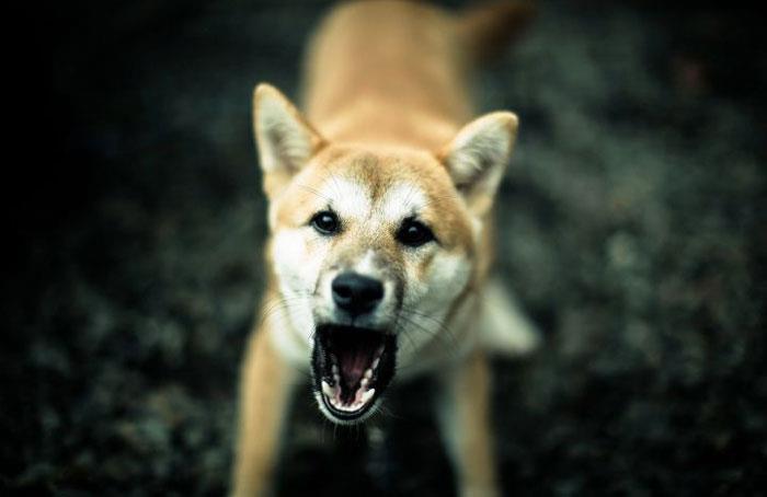 Сонник: напала, укусила собака во сне