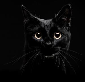 Фото К чему снится нападающий черный кот