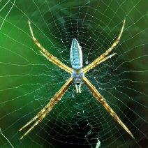К чему снится паук и паутина: мнение знаменитых толкователей