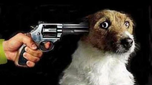 убить собаку