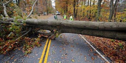падают деревья от урагана