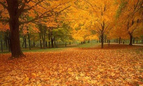 К чему снится красивая осень фото