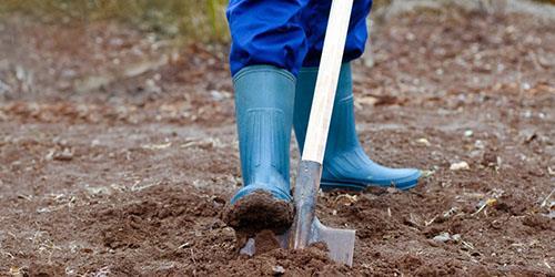 к чему снится копать огород лопатой