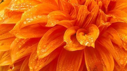 оранжевый цвет во сне