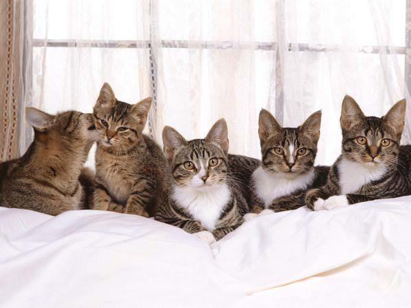 Фото Сонник кошки собаки в доме
