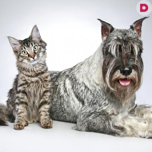 Сонник кошки собаки в доме фото