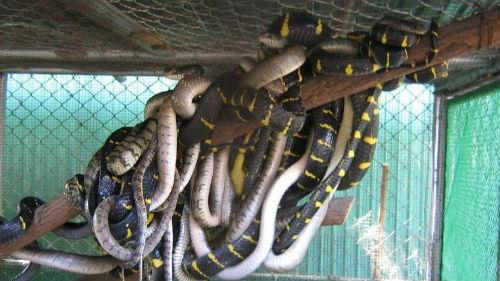 змеи в доме много