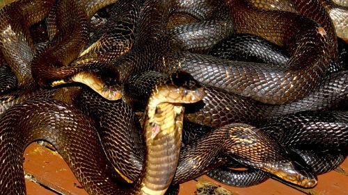 к чему снятся змеи много змей женщине