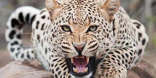 видеть во сне диких животных