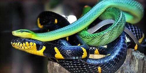 видеть две змеи во сне