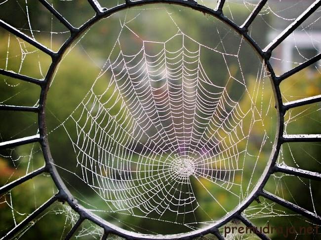 Сонник сеть