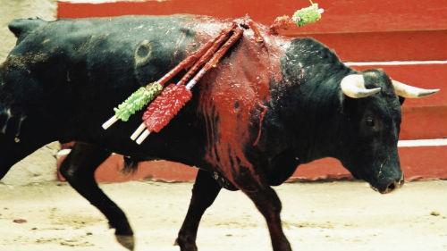к чему снится убить быка