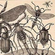 К чему снится много мух?