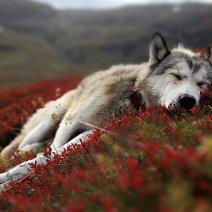 К чему снится мертвая собака: толкование образа