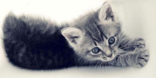 маленький кот