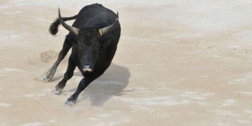 сонник черный бык