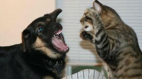 Сонник кошка с собакой дерутся фото