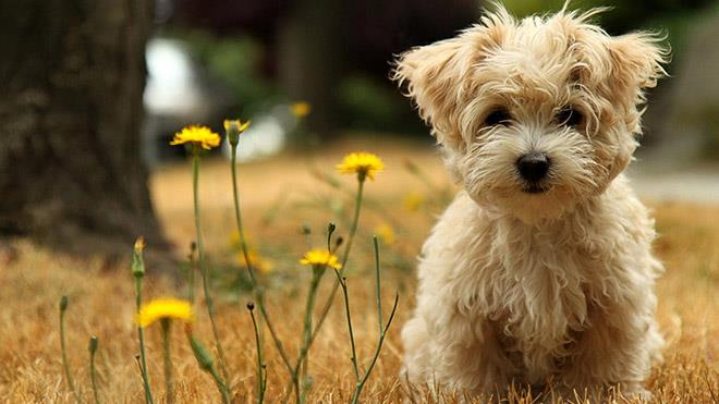 Сонник – к чему снится убить собаку во сне