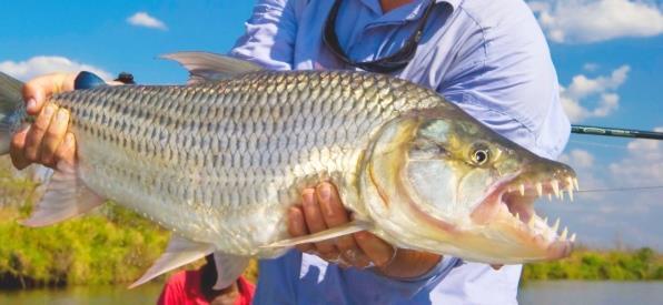 Фото К чему снится рыба с большими зубами
