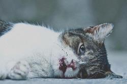 Фото К чему снится котенок в крови