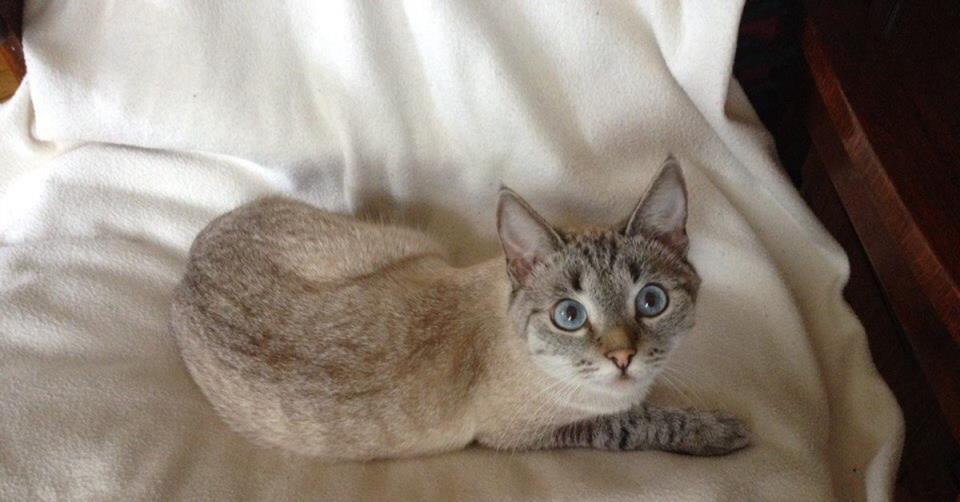 К чему снится потеря кошки фото
