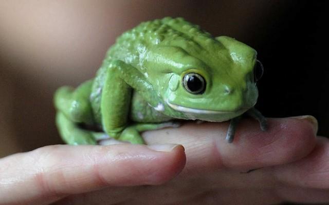 Фото К чему беременной снятся лягушки